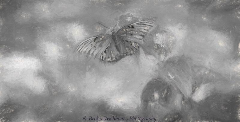 20150912_Butterflies_5 (173 of 1).jpg