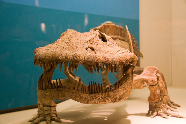 Smithsonian Museum of Natural History, Washington D.C. - June 2007