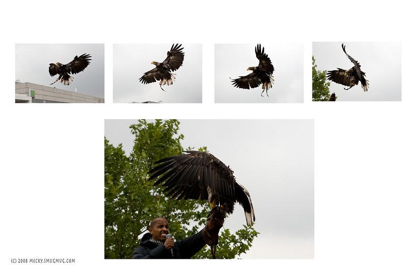 PHOTOKINA eagle.jpg