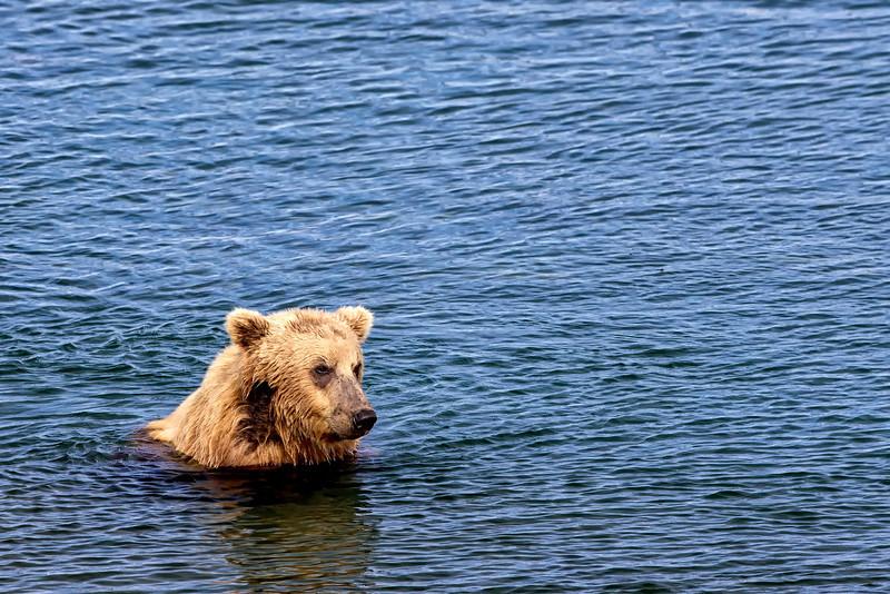 Alaska_2013_FH0T5392.jpg