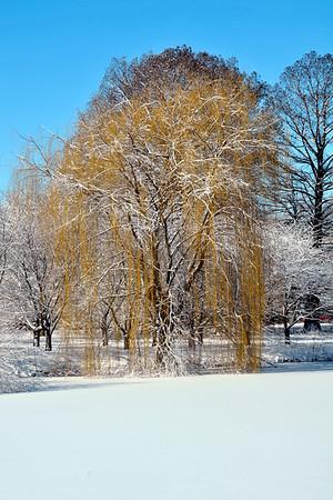 Winter in Champaign County