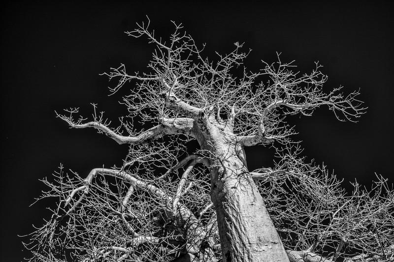 Botswana-IR-02357-Edit.jpg