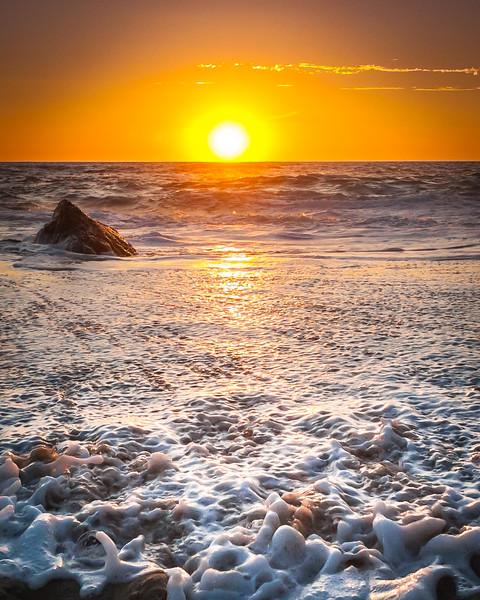 Coastal_Tribolet-78-2.jpg