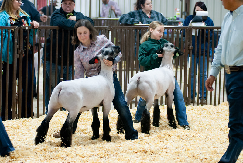 kay_county_showdown_sheep_20191207-96.jpg