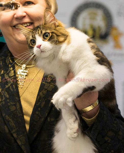 CatShow2014099.JPG