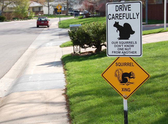 squirrel crossing photo