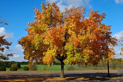 Fall Foliage - Oct_16_2014