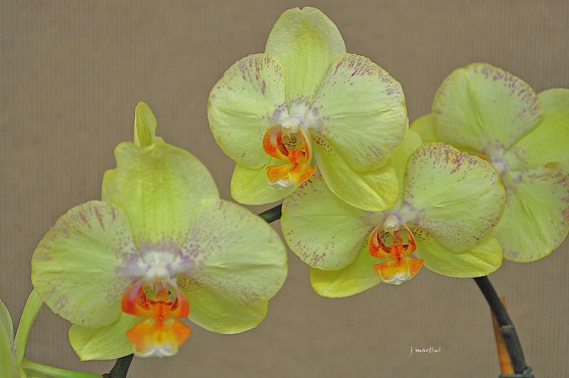 floral display 3 8-11-2011.jpg