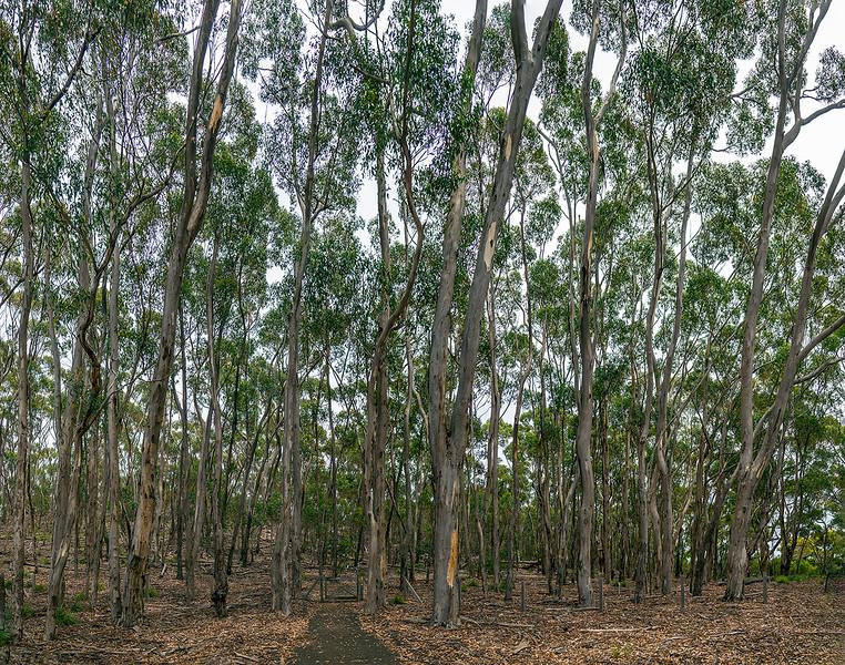 328_Panorama_Flinders-Chase_1.jpg