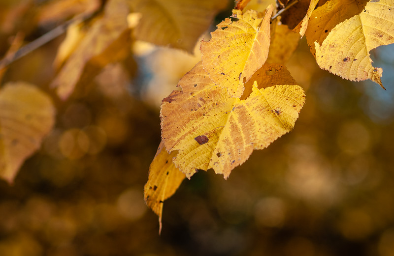 Fall_20201008_092547.jpg