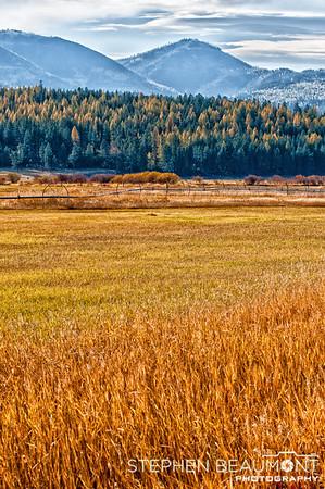Montana Fields of Gold