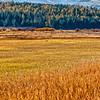 Montana Fields of Gold