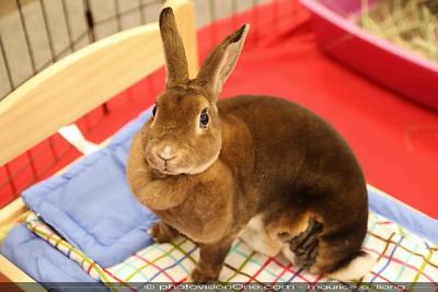 2018 BunnyFest - Bunnies & People