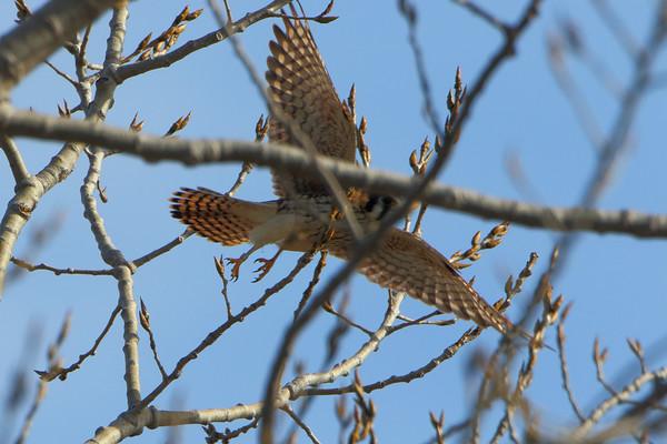 2021-01-21 Riverlands Migratory Bird Sanctuary