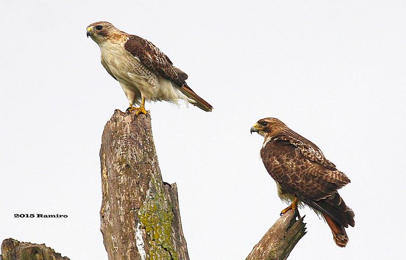 Hawks 5-9-15 259.jpg