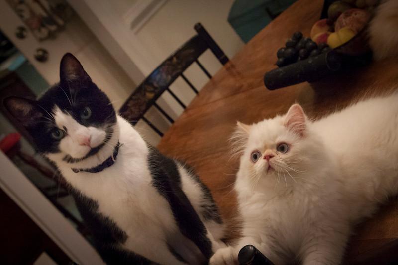 misc_cats_sep2013-7094.jpg