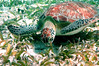 Turtle Belize Front