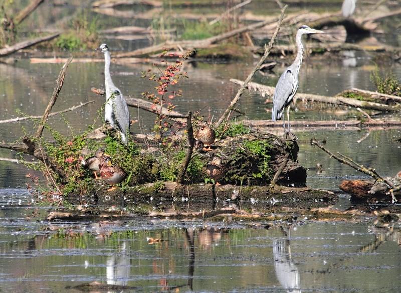 Heron Sentries