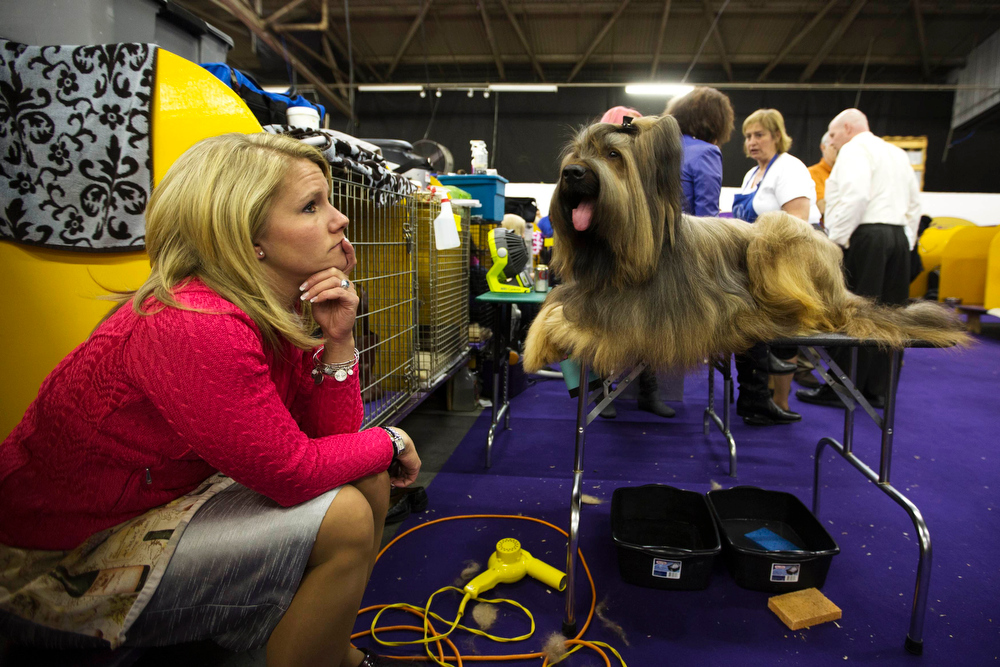 Description of . Jamie Danelson sits in the staging area with her Briard, Cumano of the Coastline, while waiting to show during the 137th Westminster Kennel Club Dog Show in New York, February 11, 2013. More than 2,700 prized dogs will be on display at the annual canine competition. Two new breeds, the Russell terrier and the Treeing Walker coonhound, will be introduced in the contest. REUTERS/Lucas Jackson