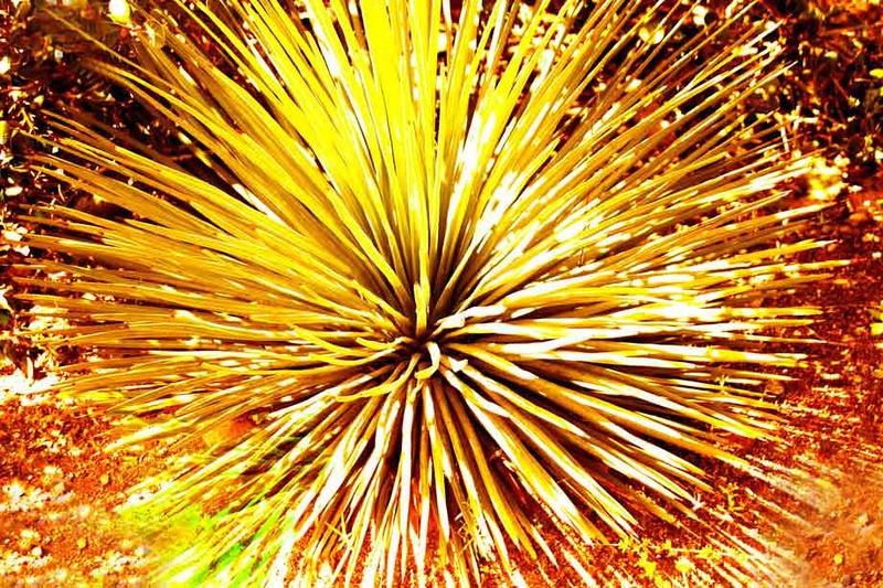 Цветочный фейервейк. 2004 г.