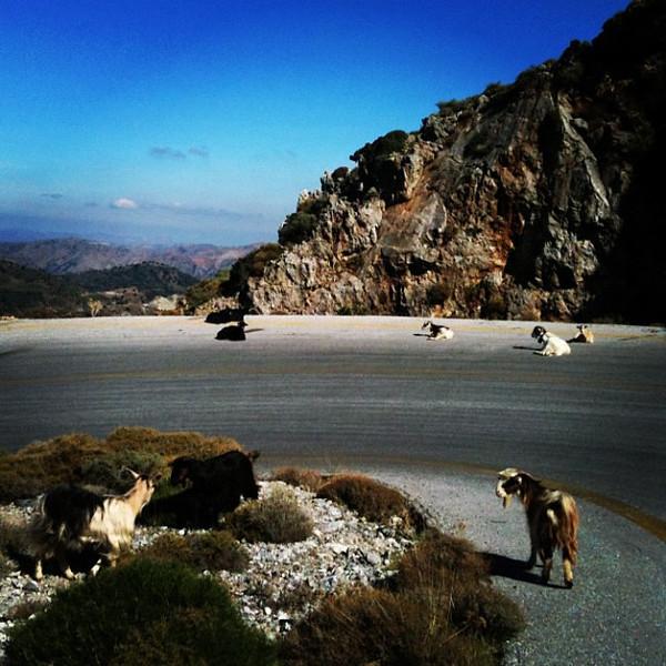 Road block, Crete style. Goats!
