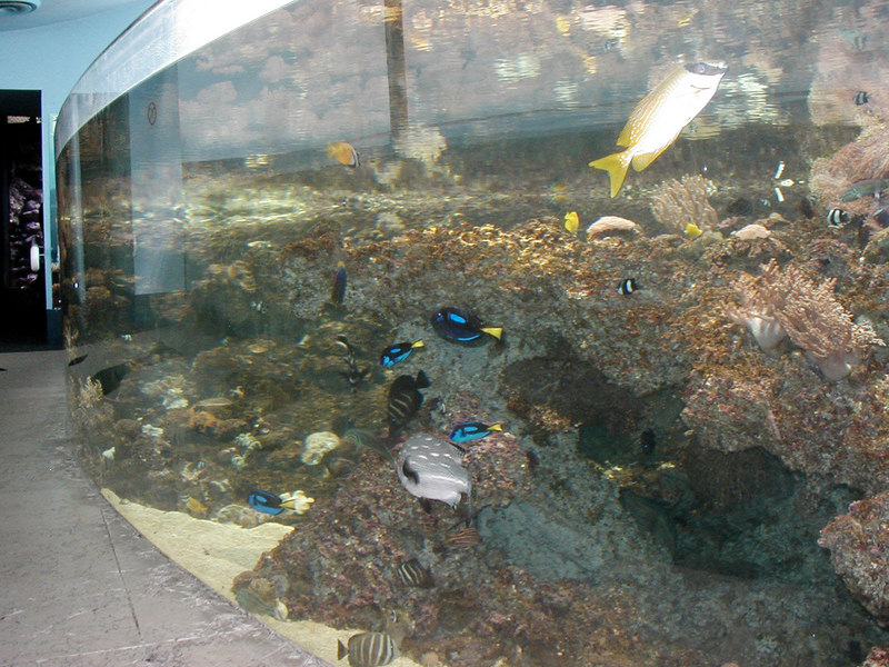 43.  Sydney Aquarium.JPG