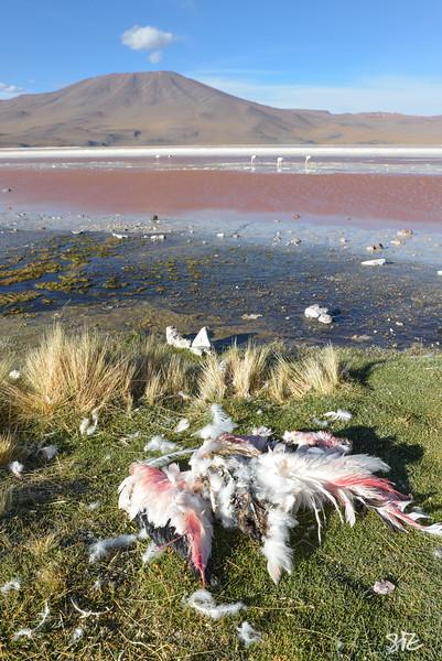 Flamingo Death