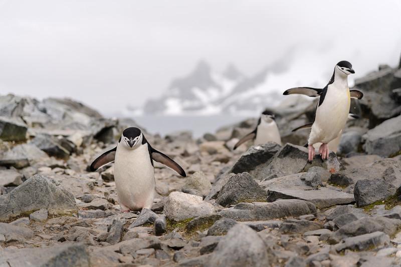 Antarctica-1428.jpg