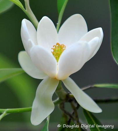 Flowers and Macros