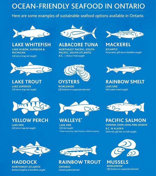 100912F Ocean Wise Informational Posters.jpg
