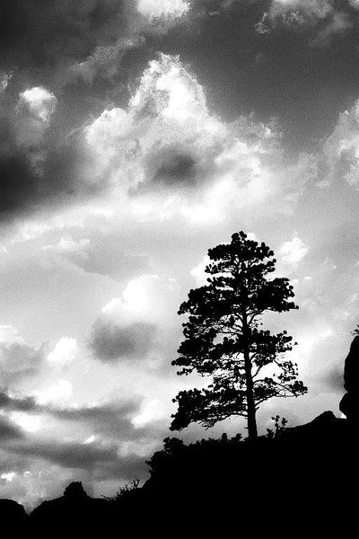 A long pine and storm clouds at the Read Rocks near Denver, CO.