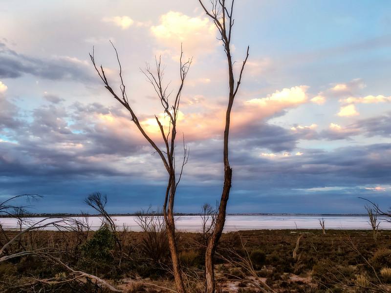 Blazing Swan 2017-Jilakin Lake #5