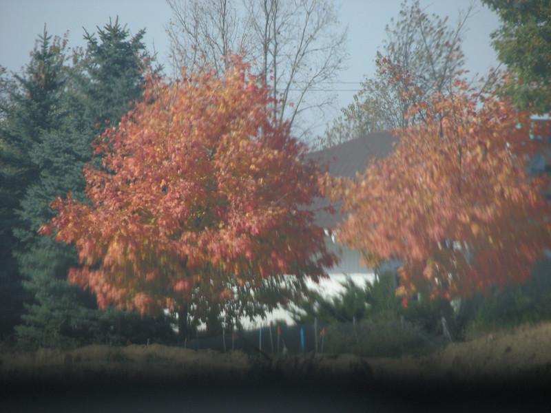 Fall pics 2008 013.jpg
