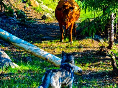 Showdown at Beaver Creek