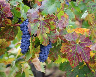A World Of Wine