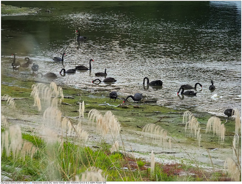 a game of Black swans