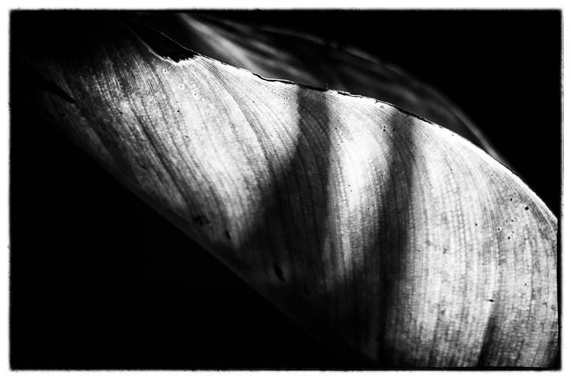 November 7 - Leaves.jpg