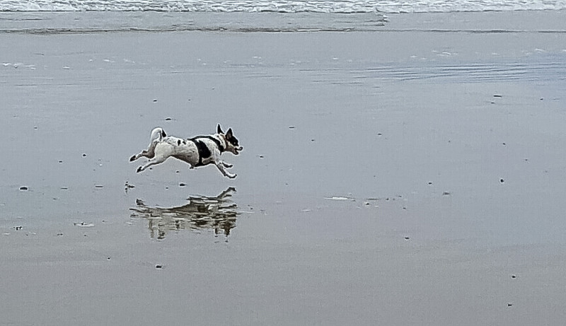 Beach walk with Mattie (20 of 20).jpg