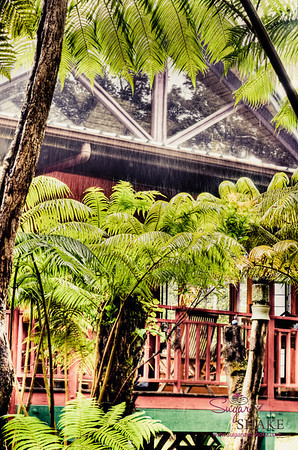 Out of the Park and back to our volcano jungle retreat, Kipuka Cottage. © 2012 Sugar + Shake