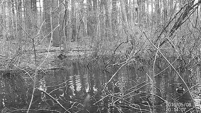 Trail Camera Scavenger Hunt #2