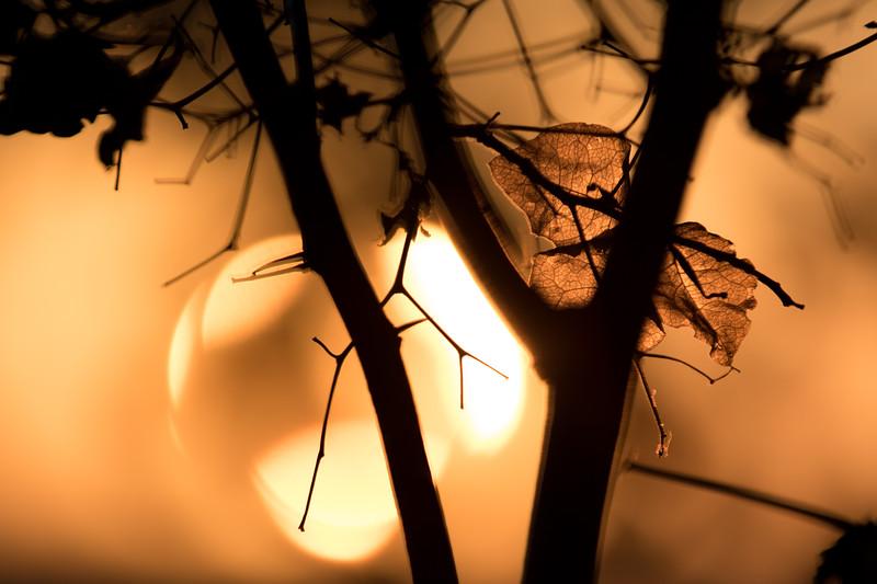 Sunset Leaf 4.jpg