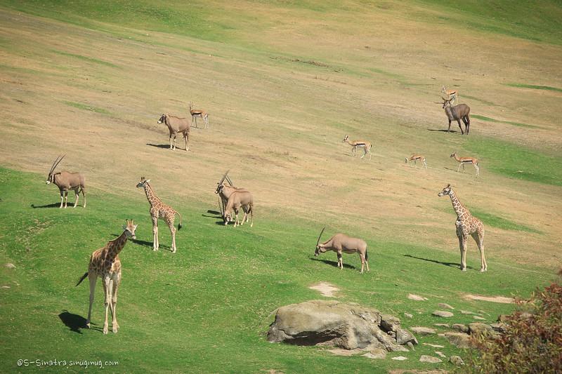 Wild animal park -1.jpg