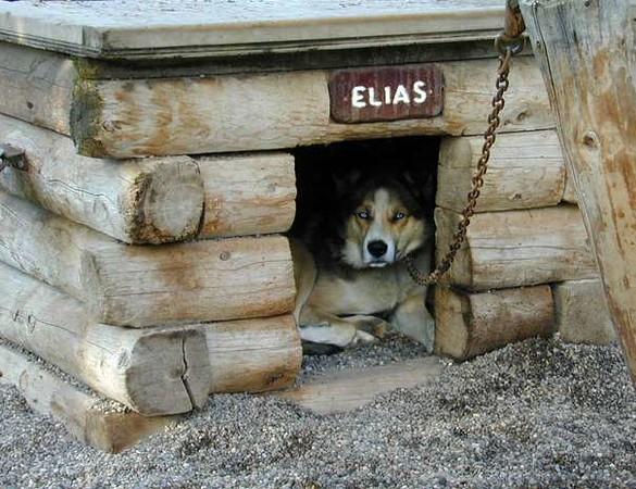 620_dscn6512_Elias_doghouse.JPG