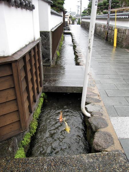Carp (nishikigoi) along the streets of Shimabara