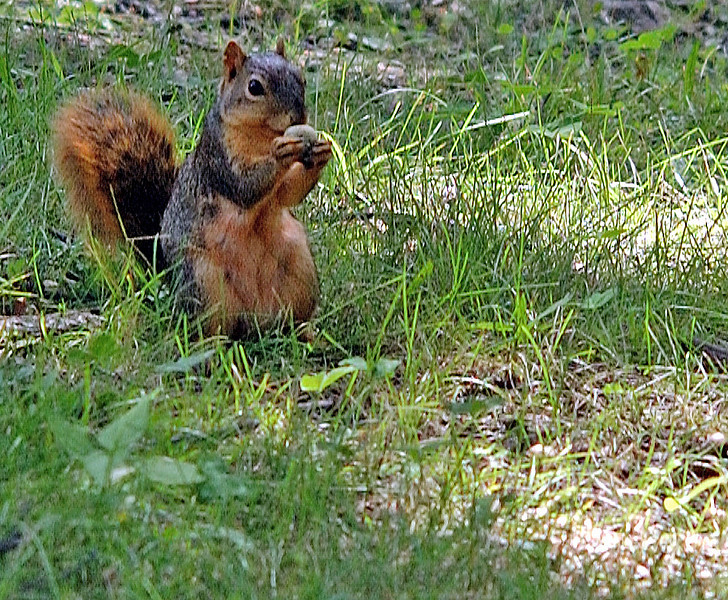 clip-015-squirrel-dsm-30aug06-c1-2893.jpg