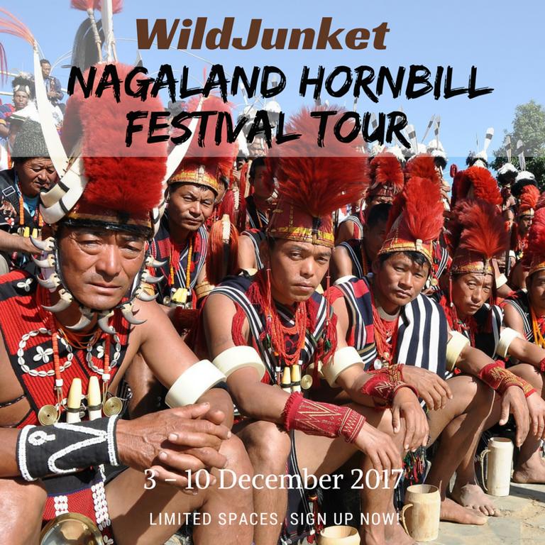 nagaland hornbill festival tour