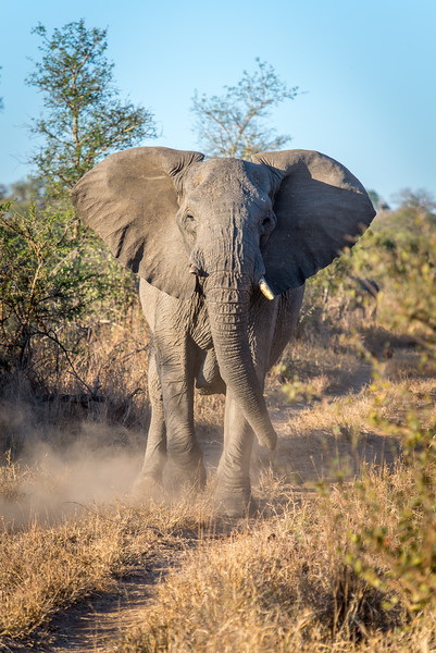 Zuid Afrika 2015 043.jpg