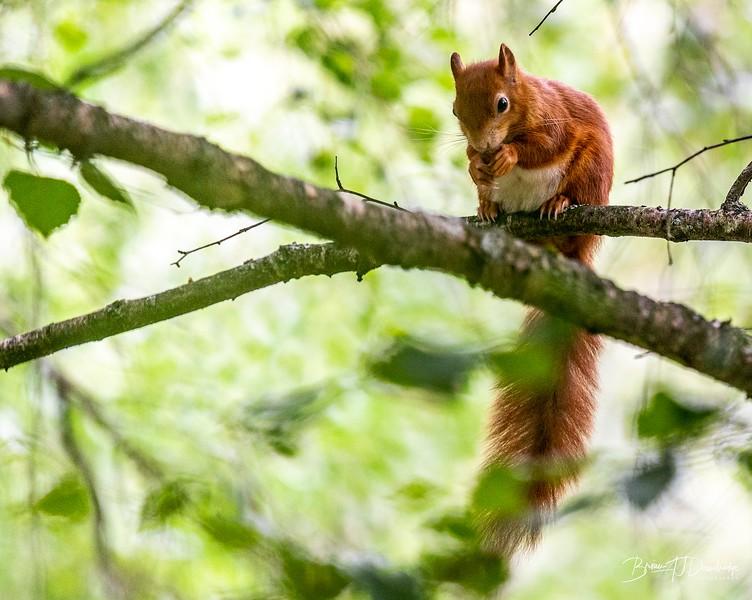 British Wildlife Centre_Z6-7352.jpg