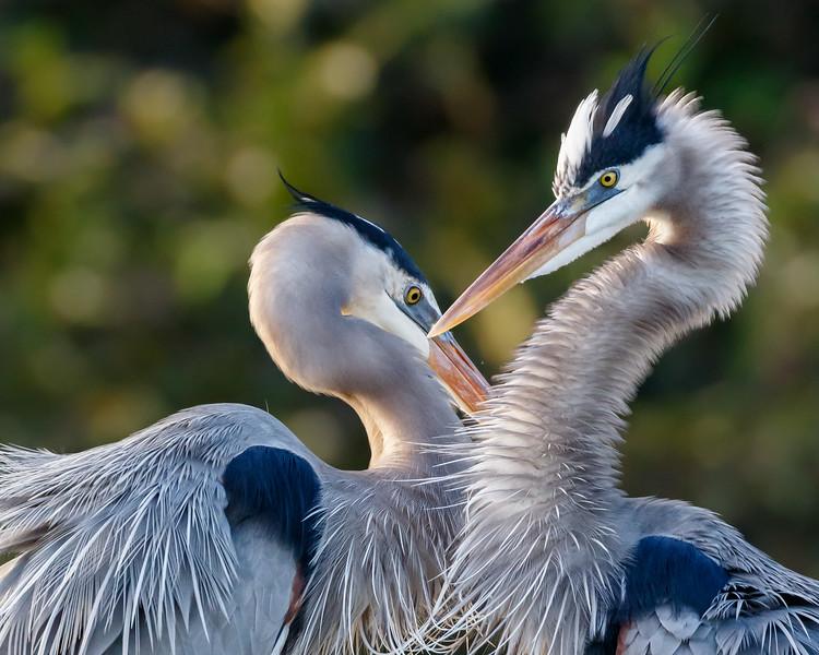 South Florida Bird Season is Warming Up