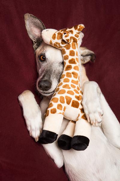 FluffAndTuff_Giraffe.jpg